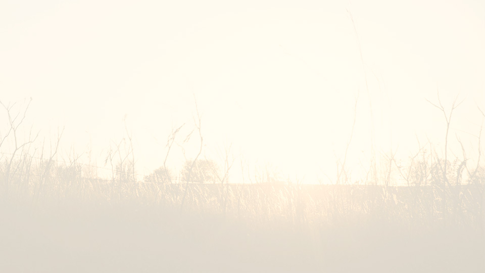 faded prairie background